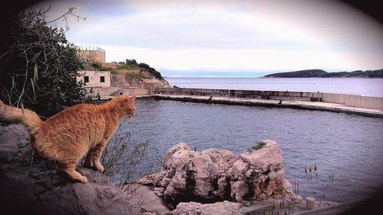 Sun Gardens Dubrovnik: View of disused beach at the hotel (cat optional)