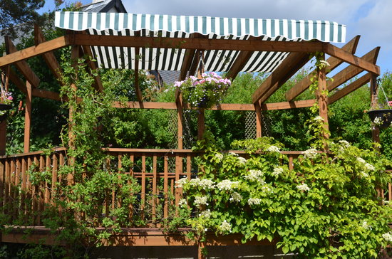 Slemish B&B: Gazebo coming back to full bloom