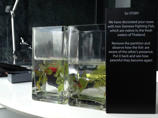 SO Sofitel Bangkok : Two Siamese fighting fish adorns the SO COMFY water element room