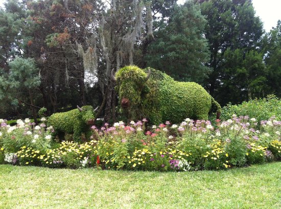 Disney's Wilderness Lodge: Jardim