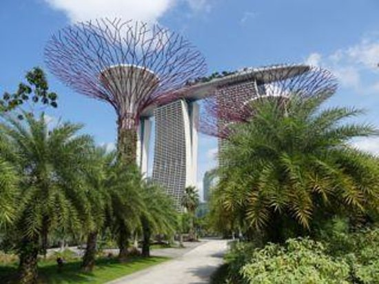 gardens by the bay super trees with marina bay sands hotel in background - Garden By The Bay Marina Bay Sands