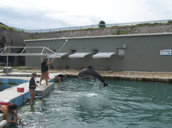 Dolphin Quest: Marley in action!