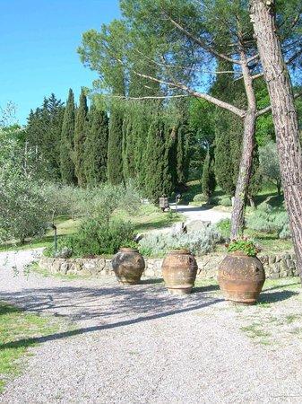 Agriturismo Il Castagnolino: Einfahrt und Parkplatz