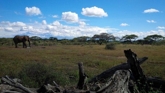 Amboseli Eco-system, Kenia: grounds