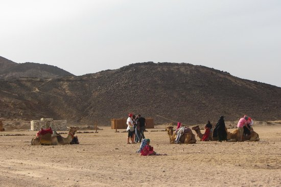 Sahara Desert : Camels in the