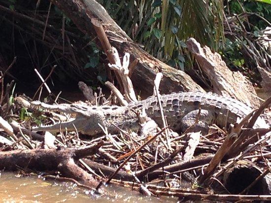 Evergreen Lodge: wildlife