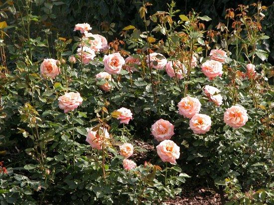 B&B Casa Ceruti: Rose
