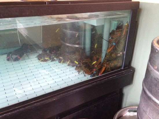 Nexxt Cafe: lagostas frescas