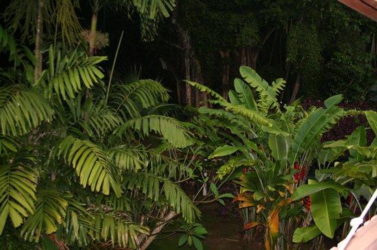 Banyan Harbor Resort: Landscaping outside lanai