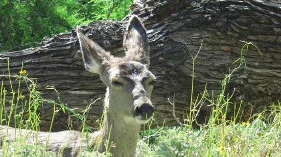 Phantom Ranch: Other Inhabitant