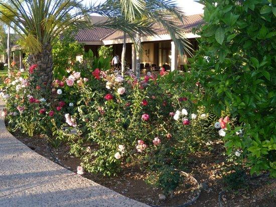 ClubHotel Riu Tikida Palmeraie : jardin