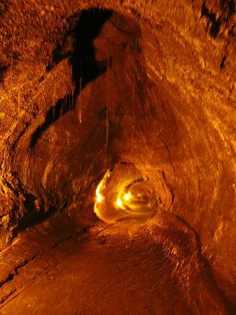 Hawaii Volcanoes National Park : The lava tube.