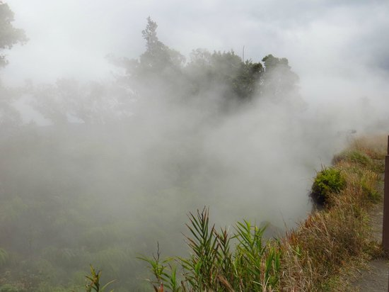 Hawaii Volcanoes National Park : Steamy vents, and yes they are HOT!