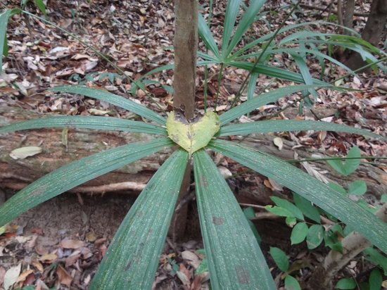 Vallarta Botanical Gardens: Nature <3