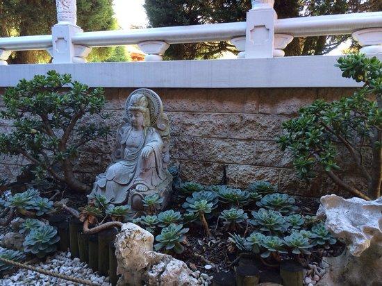 Nan Tien Temple : Bonsai garden all around