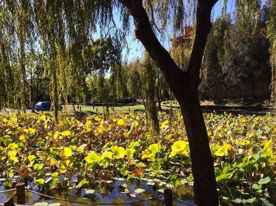 Nan Tien Temple : Lotus pond in autumn