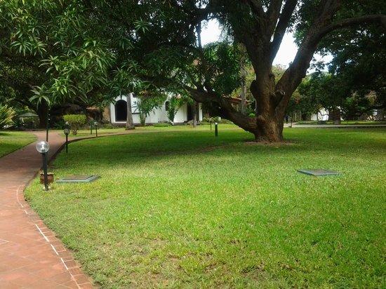 Mwembe Resort: ...and the mango trees!