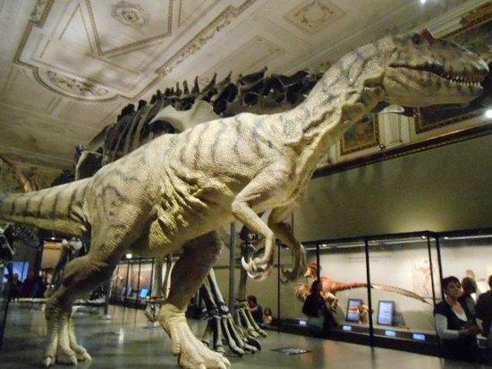 Muséum d'histoire naturelle de Vienne : dinosaure
