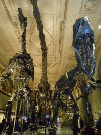Muséum d'histoire naturelle de Vienne : dinosaures