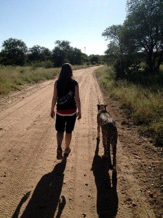 Tshukudu Bush Camp: morning walk