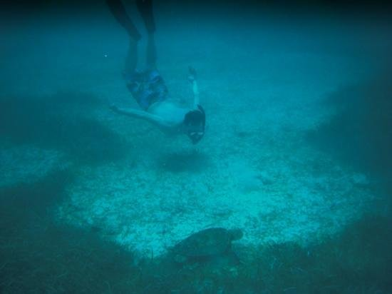 Lil Alphonse Snorkeling: green turtle