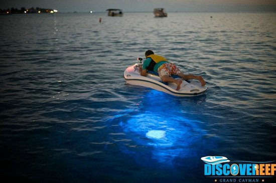 DiscoveReef: Night Reef Gliding over Cheeseburger Reef