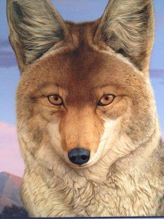 Coyote foto di albuquerque museum albuquerque tripadvisor for Craft shows in albuquerque 2017