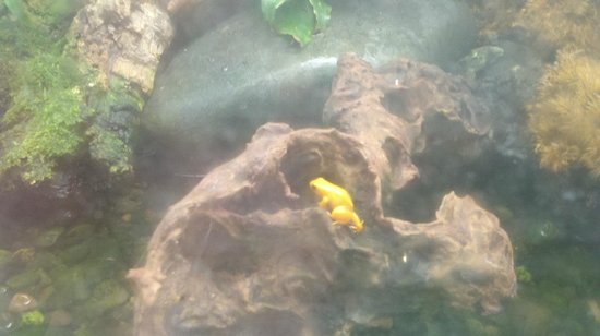 San Diego Zoo: Aquarium