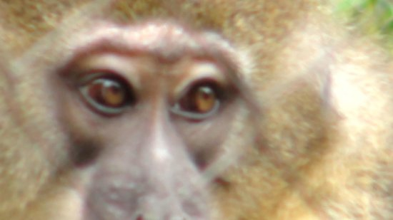 San Diego Zoo : Searching Eyes