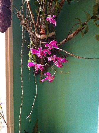 La Casa Amador: Fresh flowers and plants throughout the casa