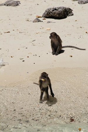 Phuket Sail Tours : Feeding monkeys on Monkey Island