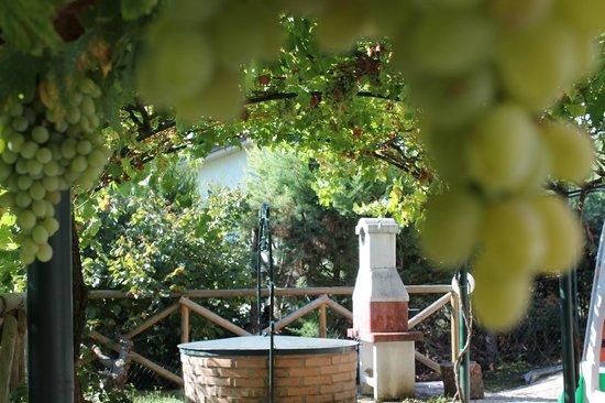 B&B Le Terrazze: vigneto da favola e uva buonissima