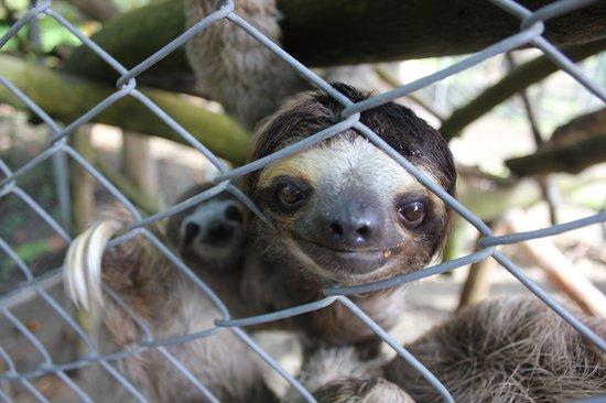 Costa Rica Wildlife Sanctuary: Sloth family
