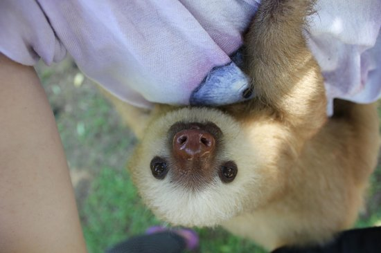 Costa Rica Wildlife Sanctuary: Tito loves cuddles!
