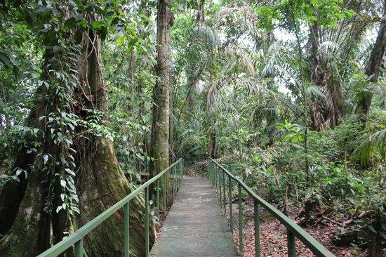 Costa Rica Wildlife Sanctuary: Walk to the butterfly garden