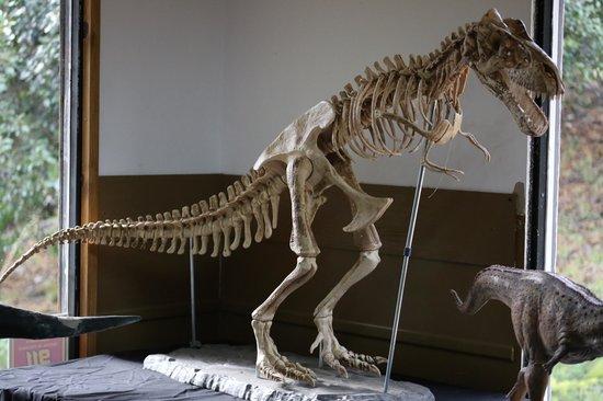 Foto De Parque Nahuelito San Carlos De Bariloche Reconstruccion De Un Dinosaurio A Partir De Sus Huesos Tripadvisor Jugá con los dinosaurios que más te gustan, pintándolos, desarmándolos y. foto de parque nahuelito san carlos de