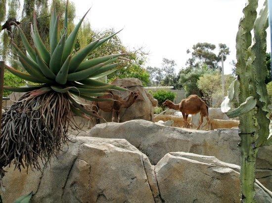 San Diego Zoo : .