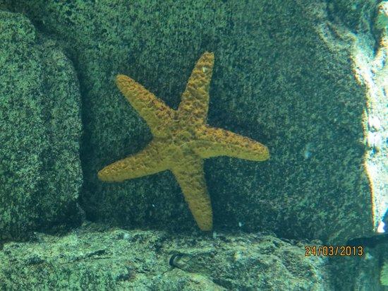 Aquário Vasco da Gama: Estrela do mar