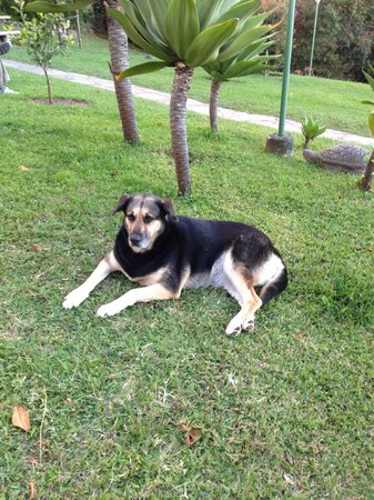 Arco Iris Lodge: Canine companion hanging out on the property