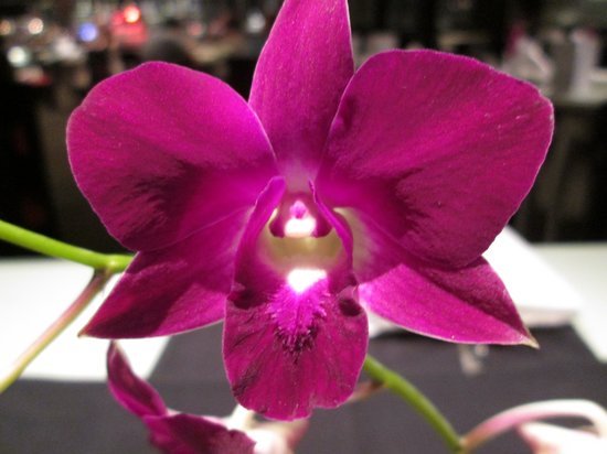 Concorde Hotel Singapore: Fresh Orchids on every table in Spices