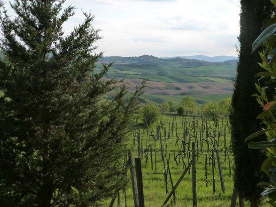 Aia Vecchia di Montalceto : view from porch