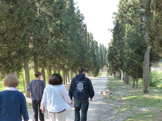 Aia Vecchia di Montalceto : walking up the lane