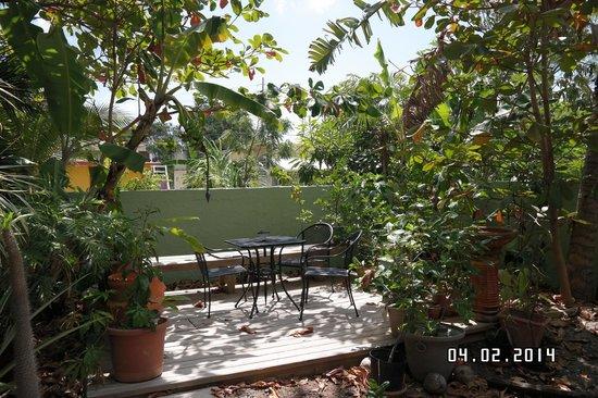 Palmetto Guesthouse: Garden