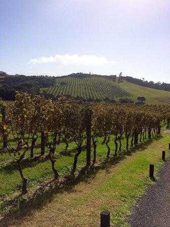Waiheke Island Wine Tours: Beautiful vineyards