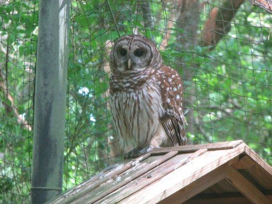 Brookgreen Gardens: Owl