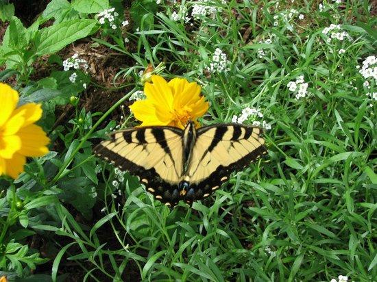 Brookgreen Gardens: Butterfly House