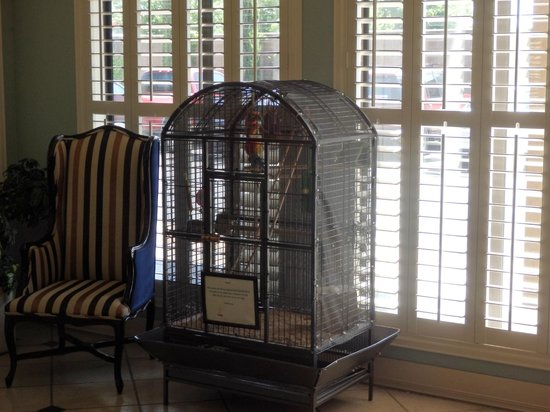 Governors Inn Hotel: A bird in the lobby. No he does not talk. A nice touch.