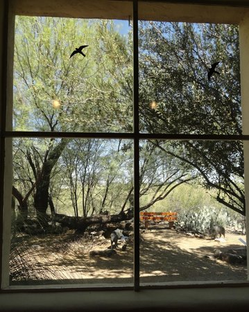 Tohono Chul: View out the large window in the museum house