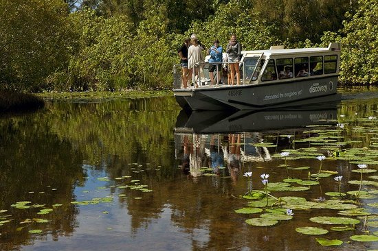 The Discovery Group: Boat in lilies