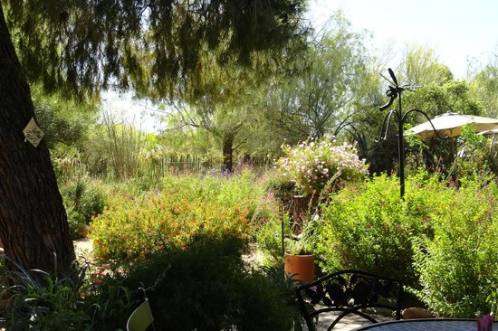 Tohono Chul Garden Bistro: view of the butterfly garden from a garden table